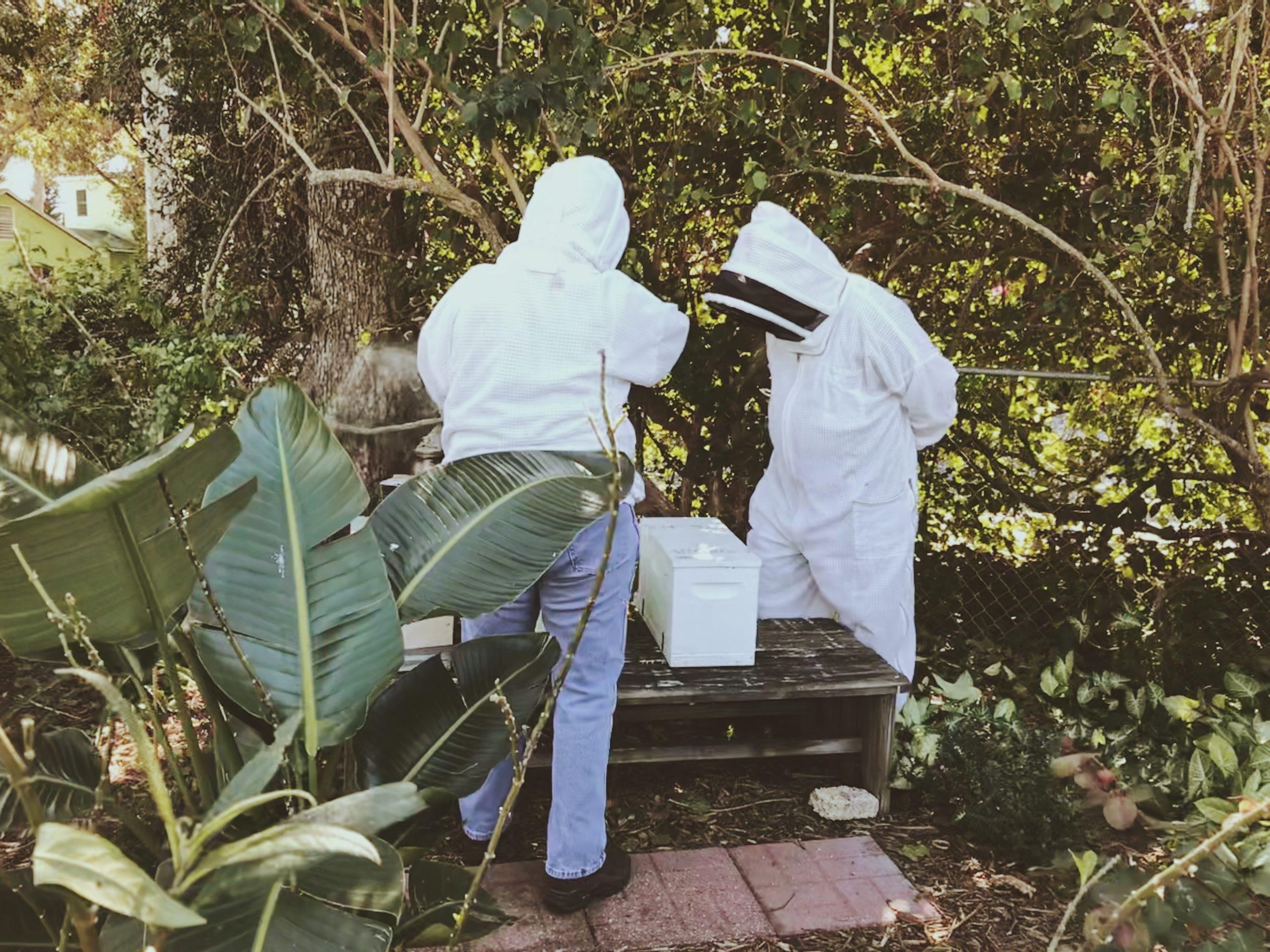 Local beekeepers in St. Petersburg, FL